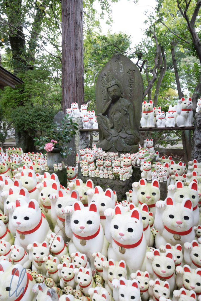 Die Katzen dominieren den Tempel