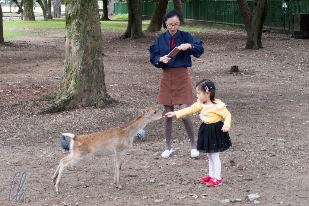 Bambi-Fütterung
