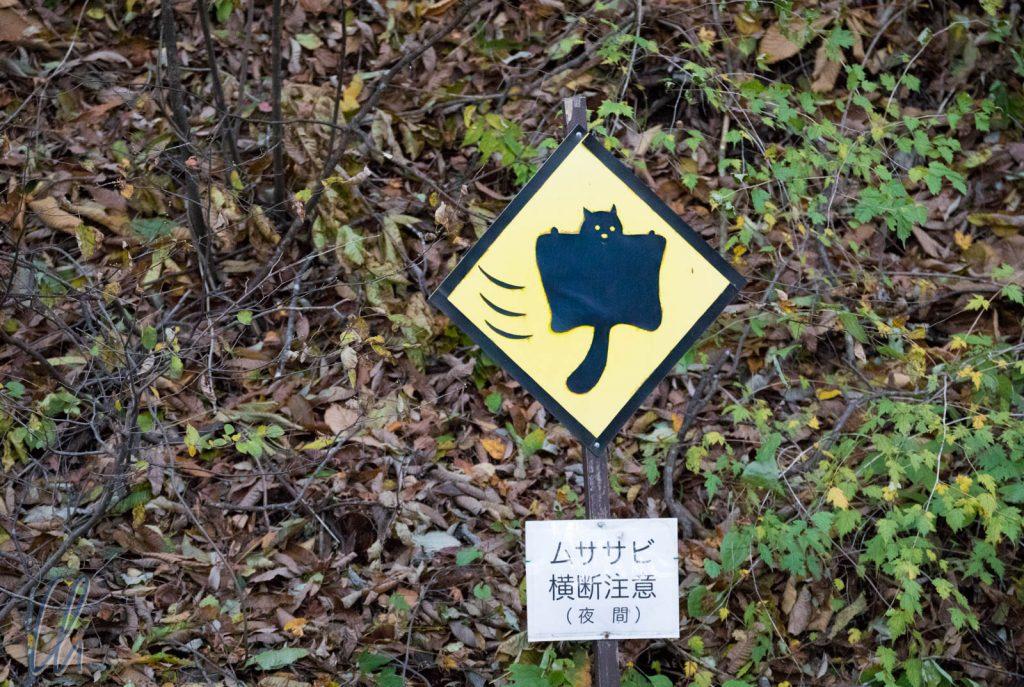 Vorsicht, Eichhörnchen im Anflug!