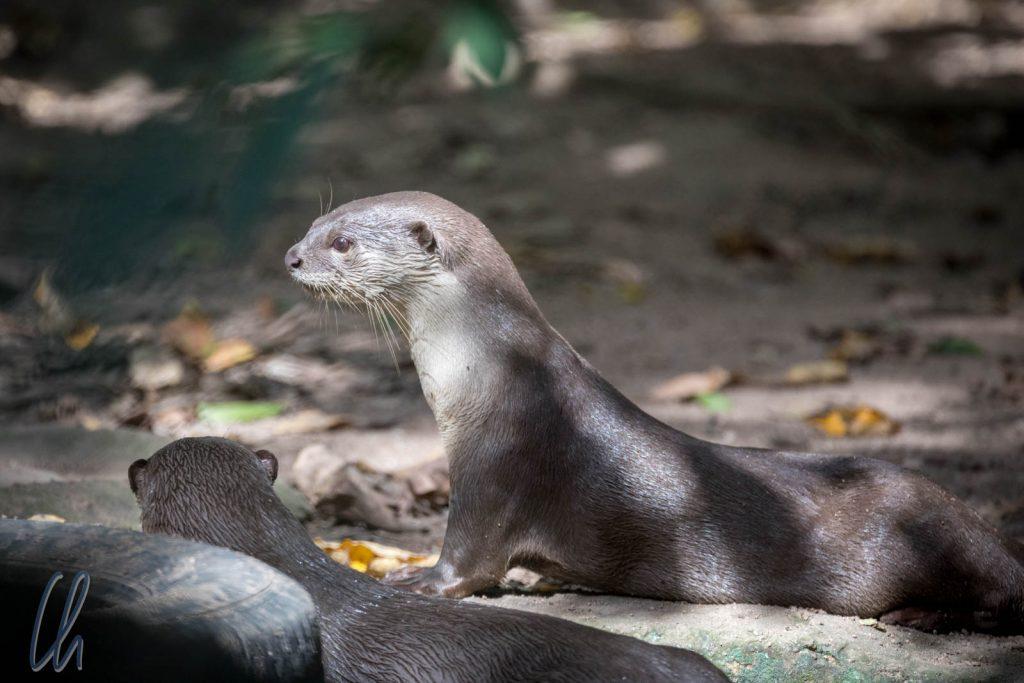 Die Otter waren sehr aktiv und verspielt