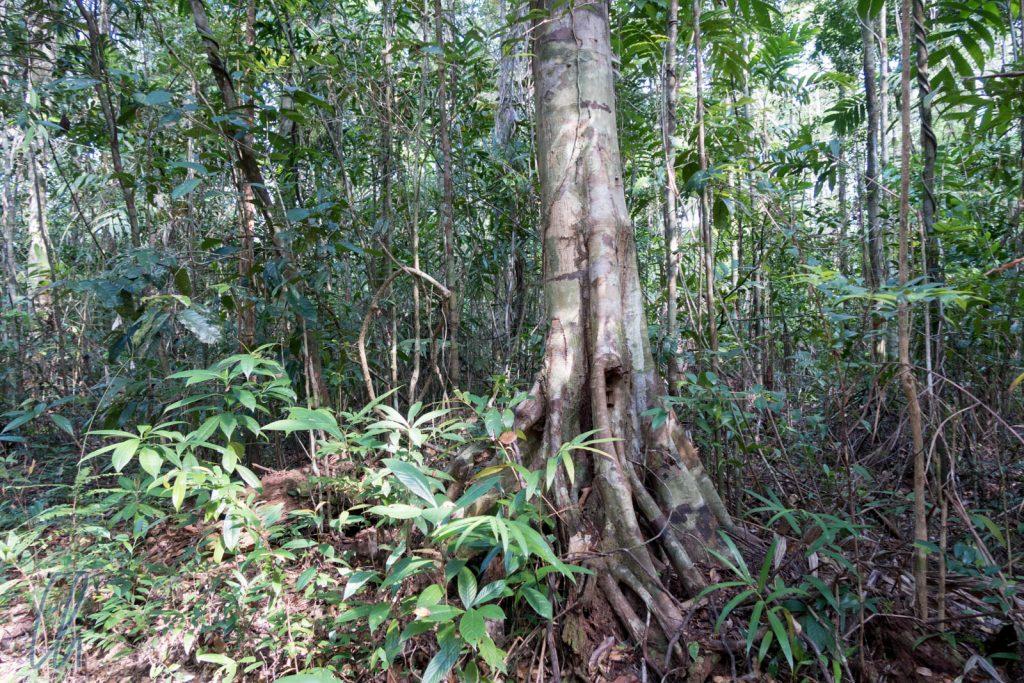 Der Dschungel von Chi Phat