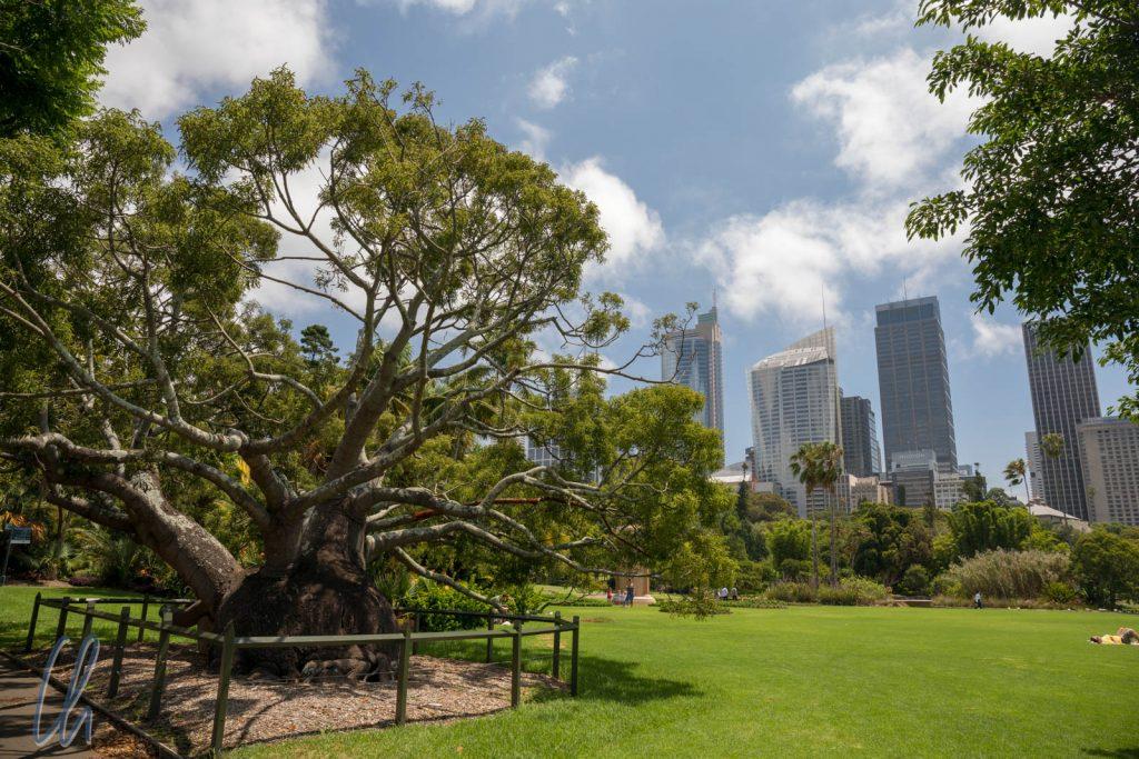 Im Botanischen Garten, unweit der Anlegestelle der First Fleet