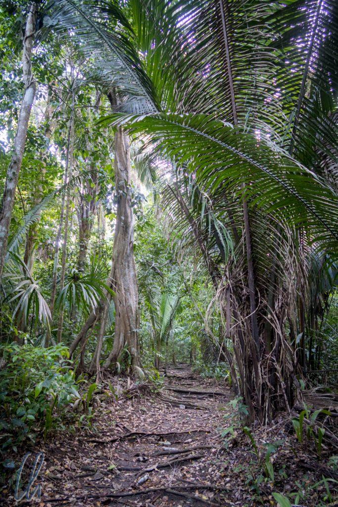 Der Dschungel, das Zuhause der Moskitos