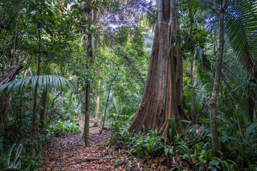 Nur wenige wirklich hohe Bäume standen im Wald