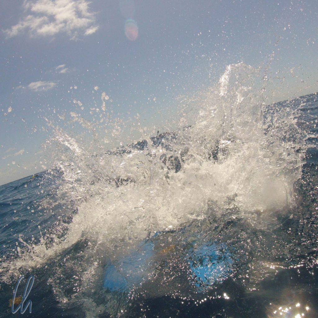 Platsch! Auf der Suche nach den Walhaien
