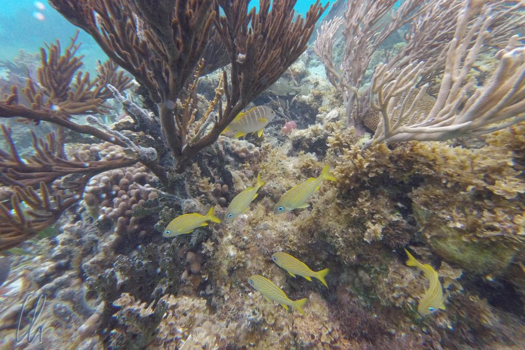 Intakte Korallen und bunte Fischlein