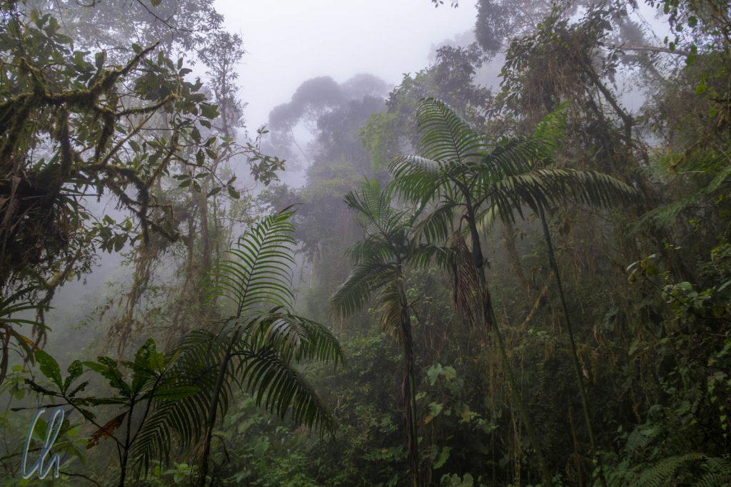 Der Nebelwald macht seinem Namen alle Ehre