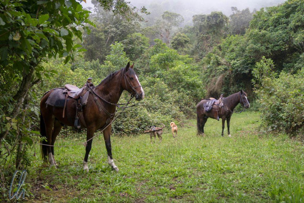 Die Pferde erwarteten uns schon für den Ritt zurück nach Hause.