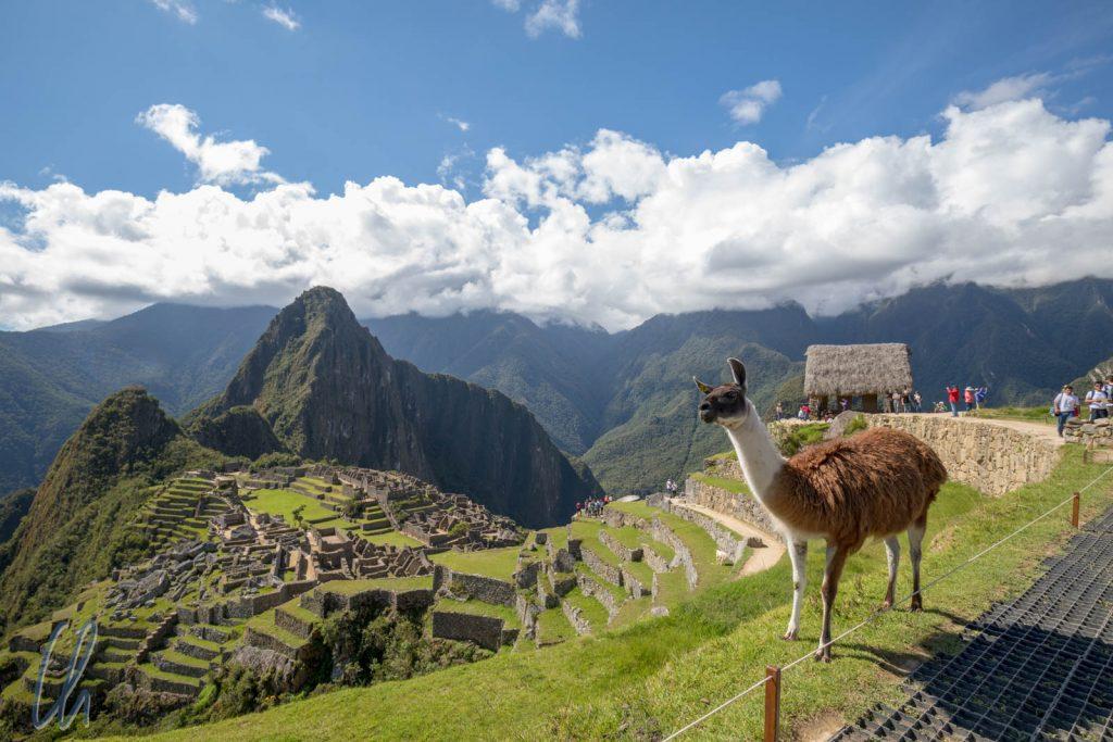 Eine Inka-Stätte für eine Lama