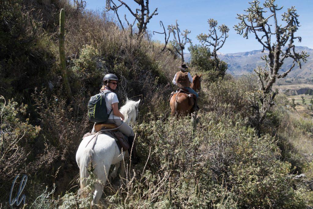 Unterwegs am Rande des Colca-Tals