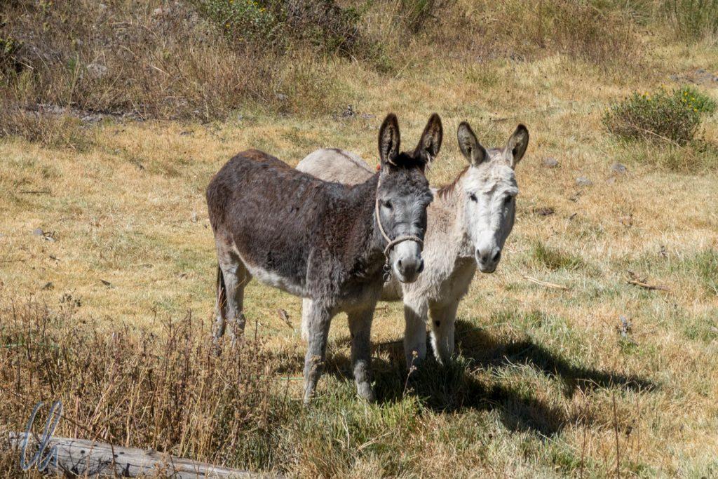 Zwei gut gelaunte Esel