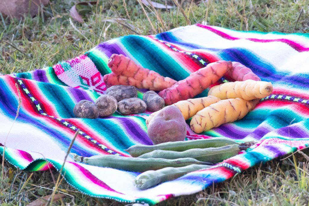 Verschiedene Arten von Kartoffeln, so bunt wie die Decke, auf der sie liegen