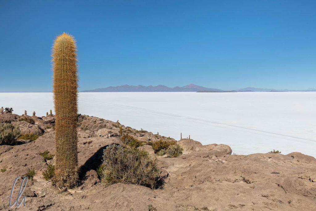 Eine Insel mitten in der Salzwüste