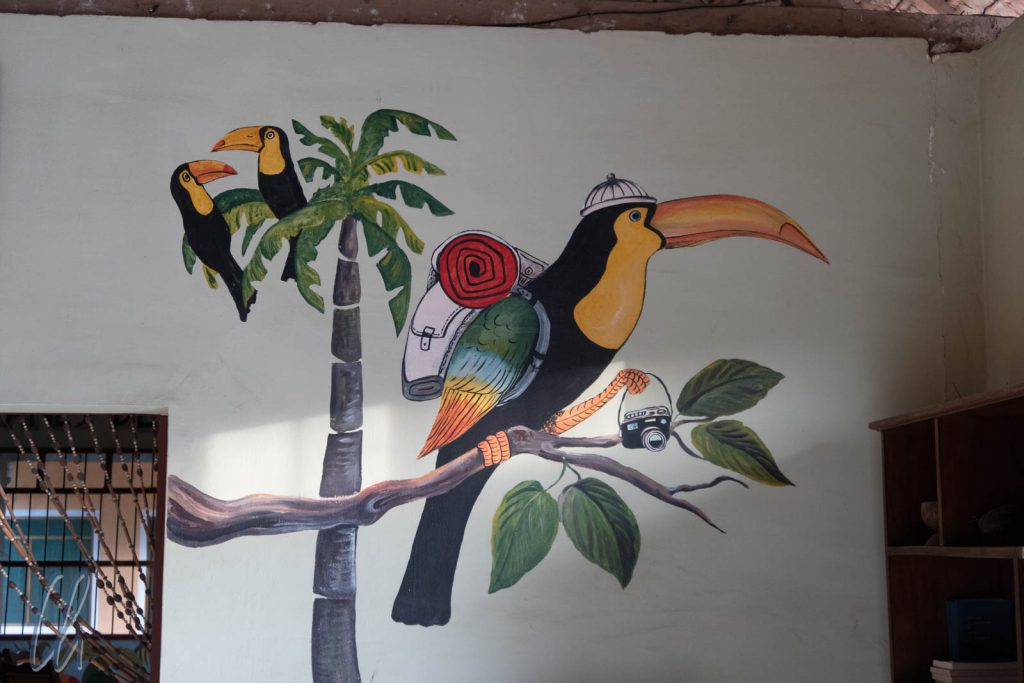 Tucan statt Kondor, auf geht's in den Dschungel
