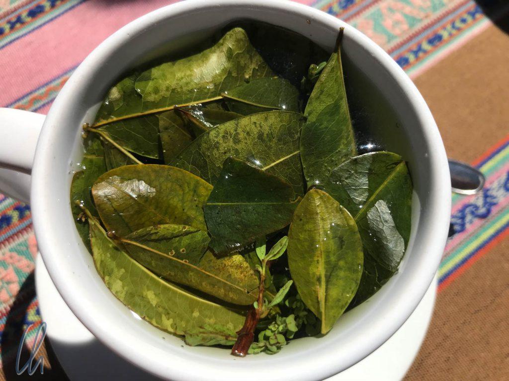 Cocatee aus echten Cocablättern und ein bisschen Muña
