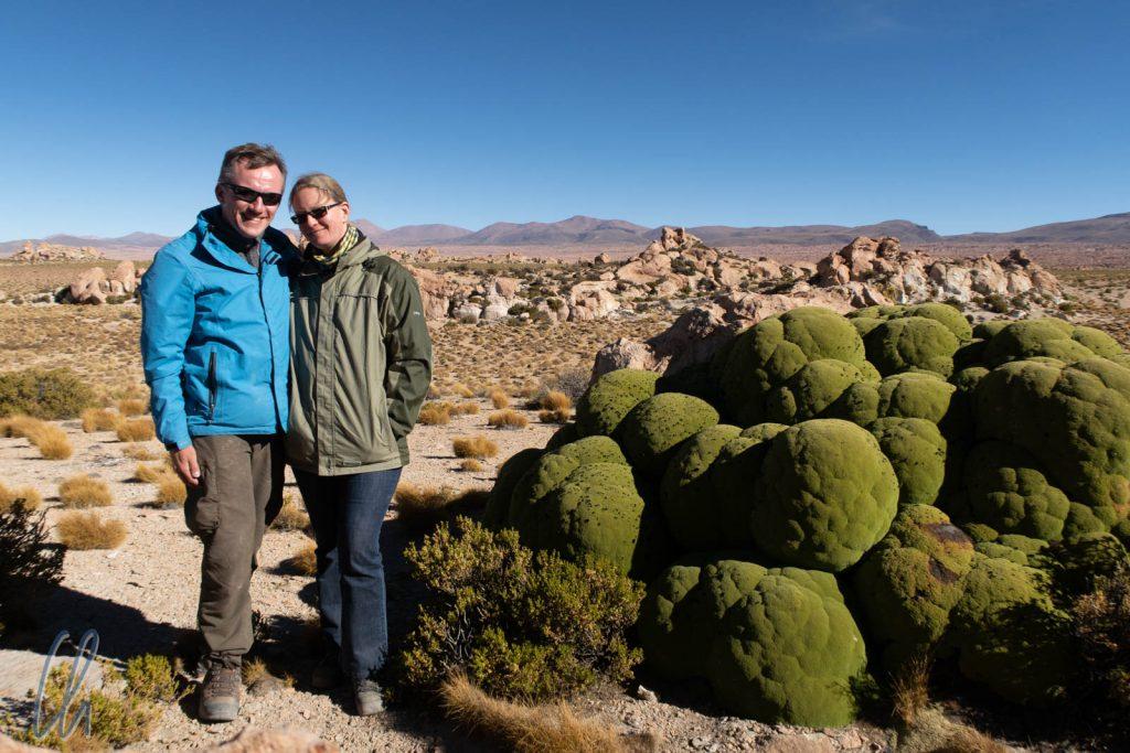 Grüner Anden-Blumenkohl: Yareta. Dieses Exemplar muss sehr alt gewesen sein.