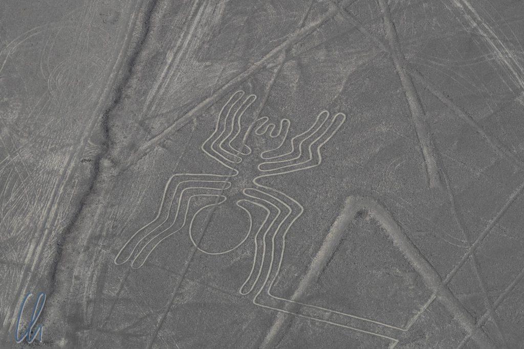 Die Nazca-Spinne