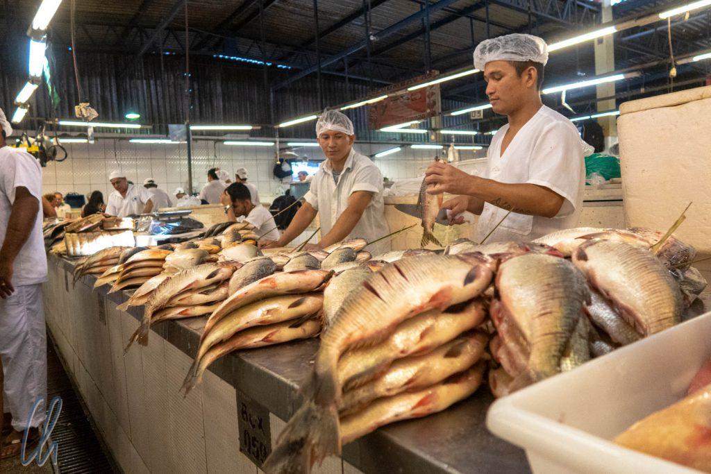 Die Haut der Fische wird eingeritzt, damit sich beim marinieren und Grillen der volle Geschmack verbreitet.