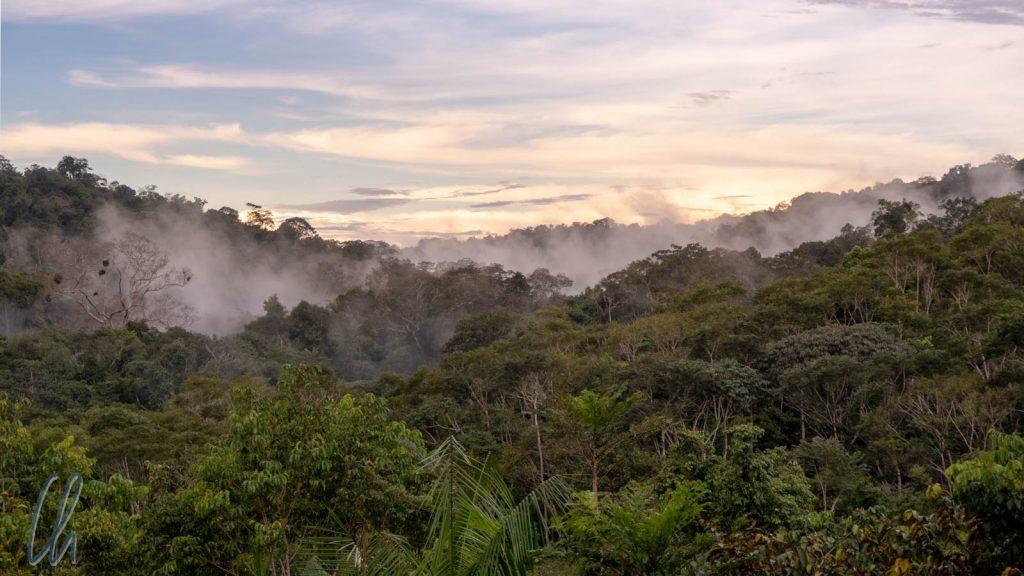 Kurz nach unserer Ankunft macht der Regenwald seinem Namen alle Ehre. Eine Stunde später trieben die Nebelschwaden durch die Wipfel.