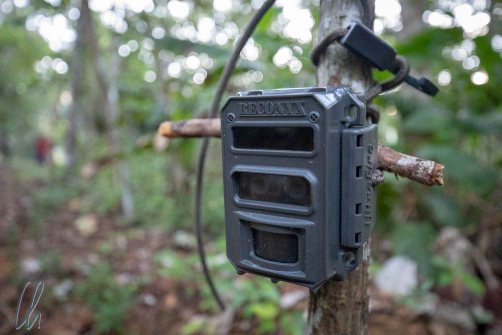 Eine der Kamerafallen zur Erforschung der Tierwelt des Dschungels.