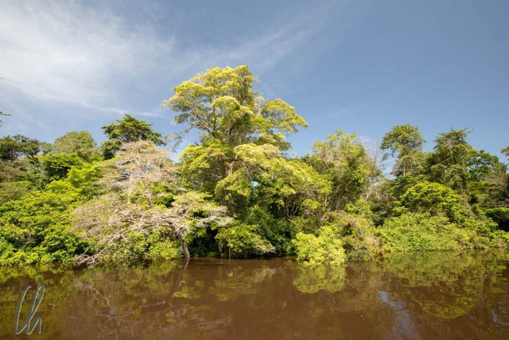 So saftig grün werden wir uns an den Rio Negro und den Parque Nacional do Jaú erinnern.
