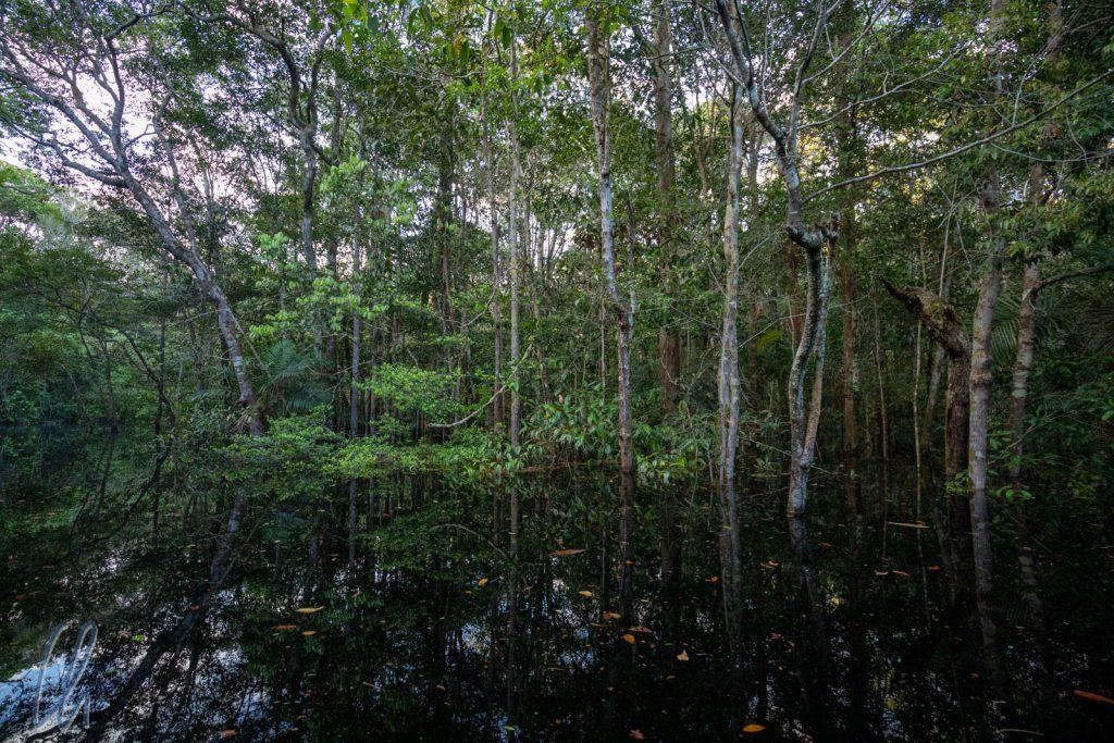 Die Grenzen zwischen Fluss und Wald verschwimmen.