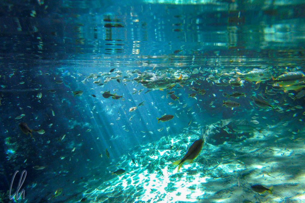 Hunderte von Fischen im Aquario Encantado
