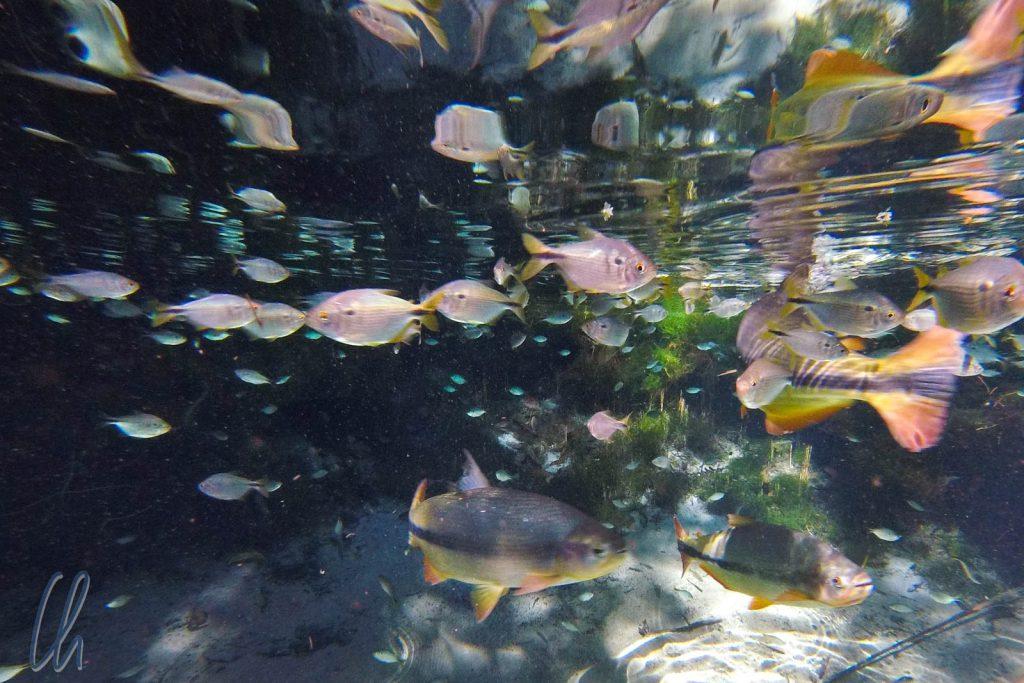 Ein brasilianisches Highlight: Das Aquario Encantado bei Bom Jardim