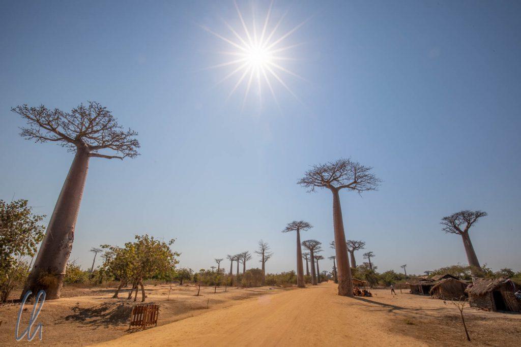 Die Baobab-Allee entlang der RN8, fast menschenleer am späten Vormittag