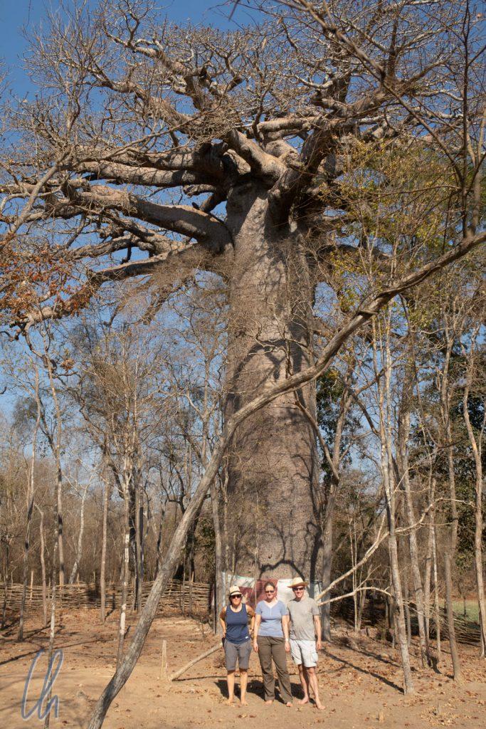 Der heilige Baobab im Trockenwald