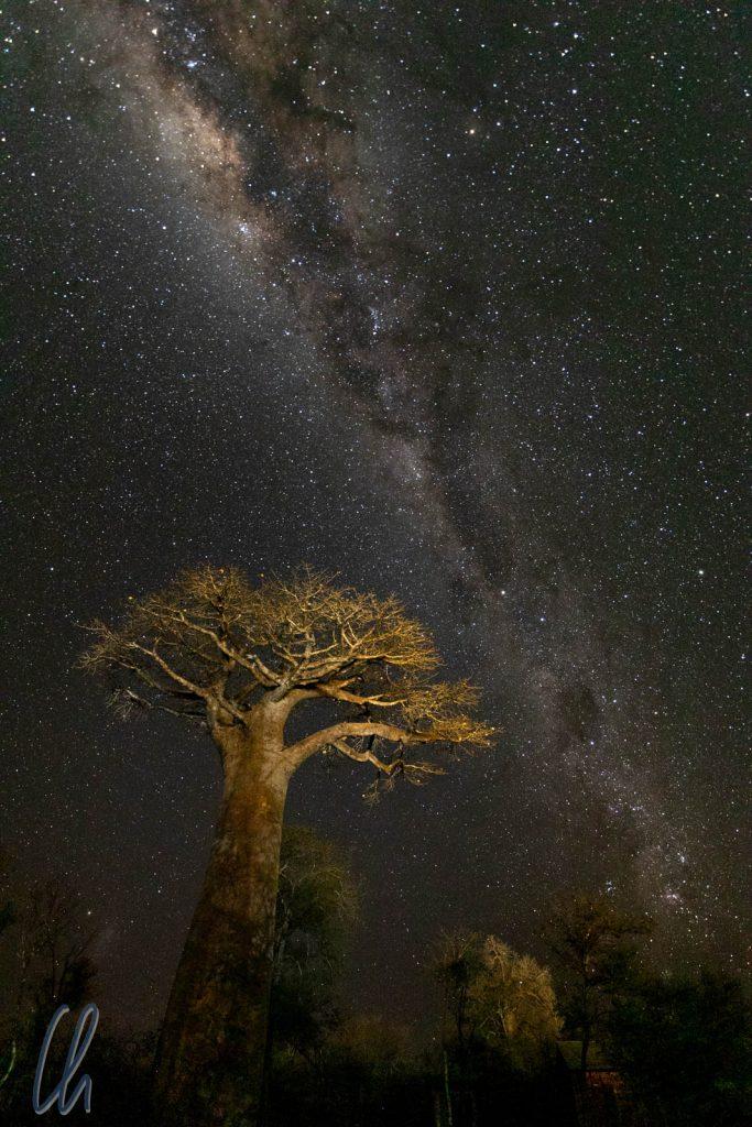 Ein freistehender Baobab unter der Milchstraße