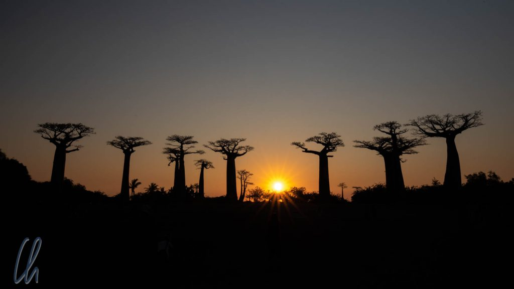 Die Baobab-Allee beim Sonnenuntergang