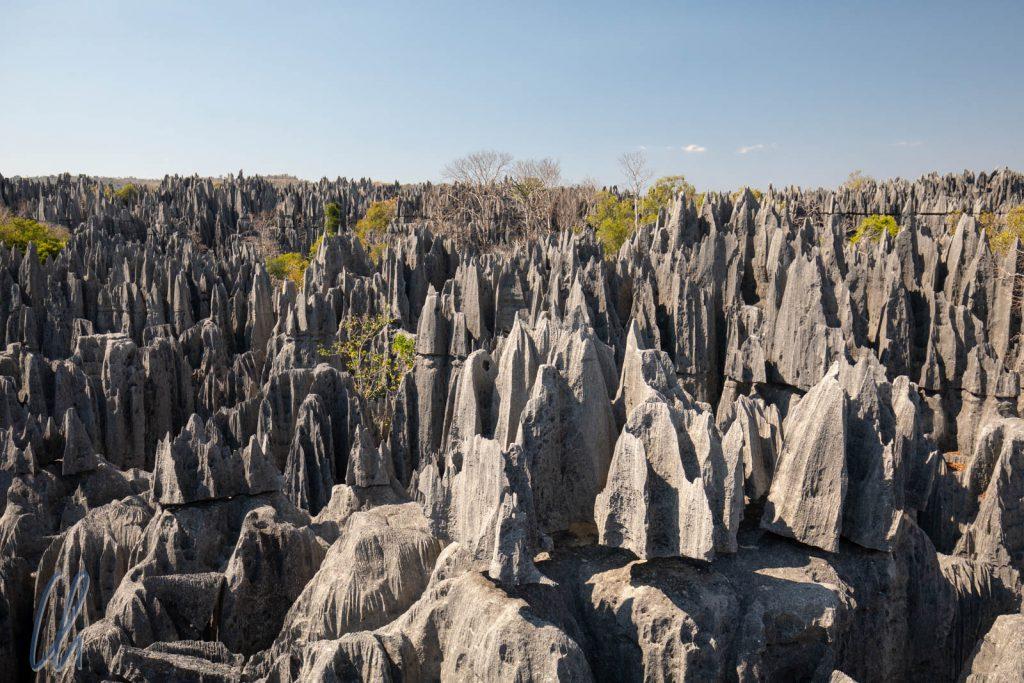 Die großen Tsingys, ein Meer aus scharfen Spitzen und schroffen Kanten