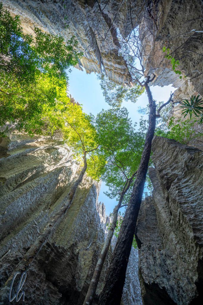 Selbst in den tiefsten Tsingy-Schlucht wachsen hohe Bäume.