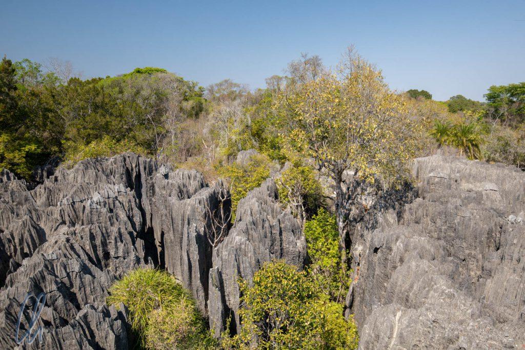 Blick über die kleinen Tsingys. Sie sind wesentlich grüner als der große Bruder.