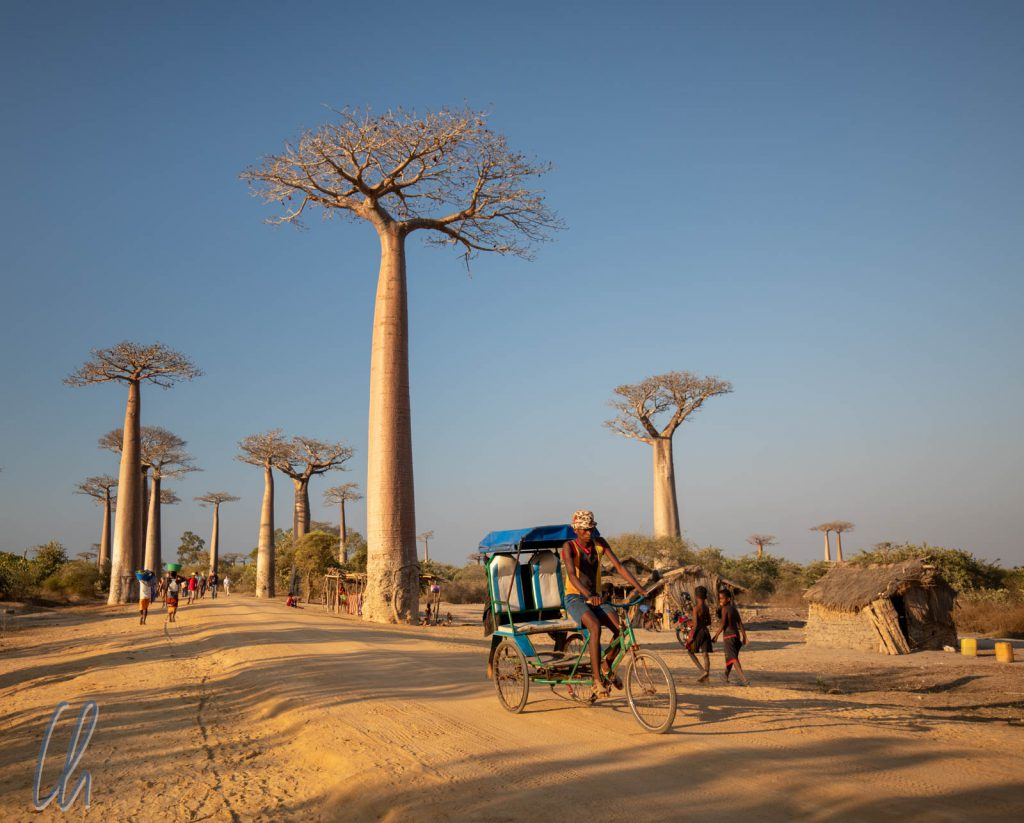 Die Baobab-Allee, einer der touristischsten Orte auf Madagaskar.