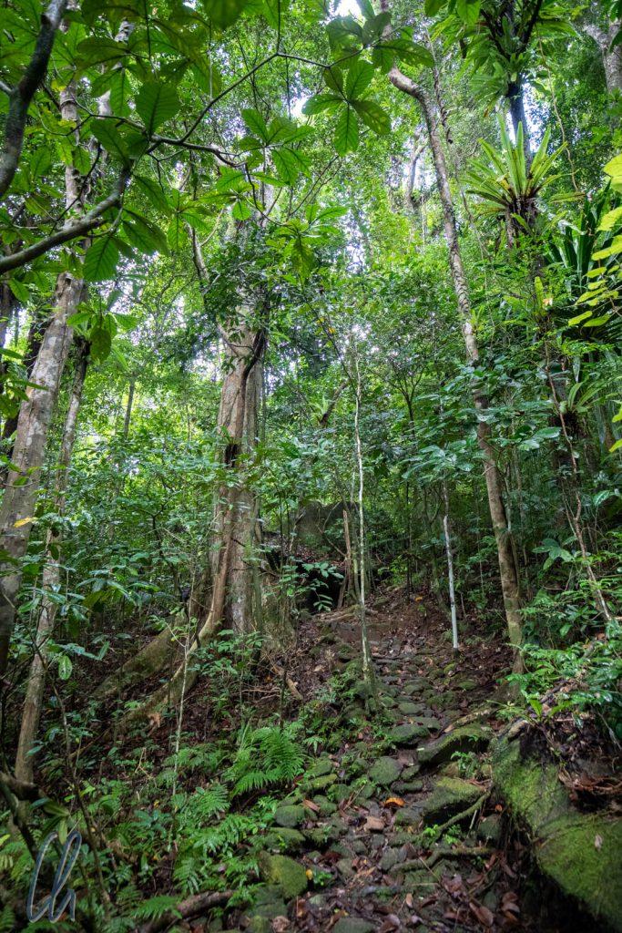 Der Wald auf Nosy Mangabe machte einen unberührten Eindruck und der Weg forderte unsere Kondition.