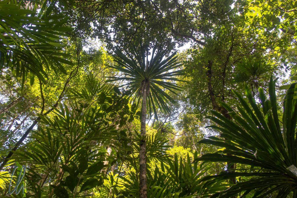 Vegetation auf allen Ebenen