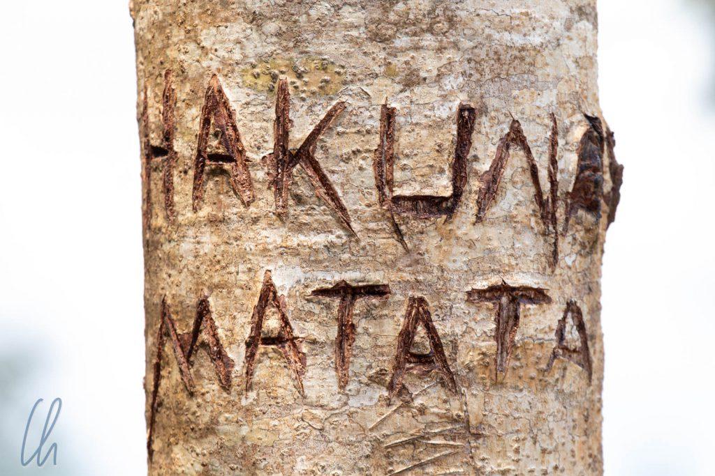 Hakuna Matata: Kein Problem!