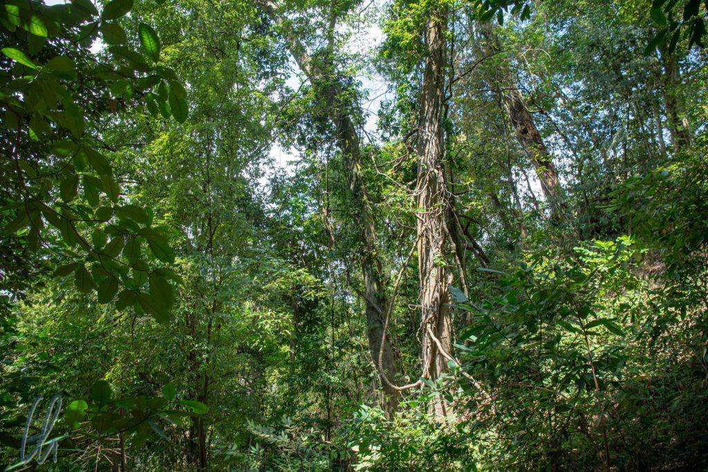 Trotz Trockenzeit war der Wald saftig grün.
