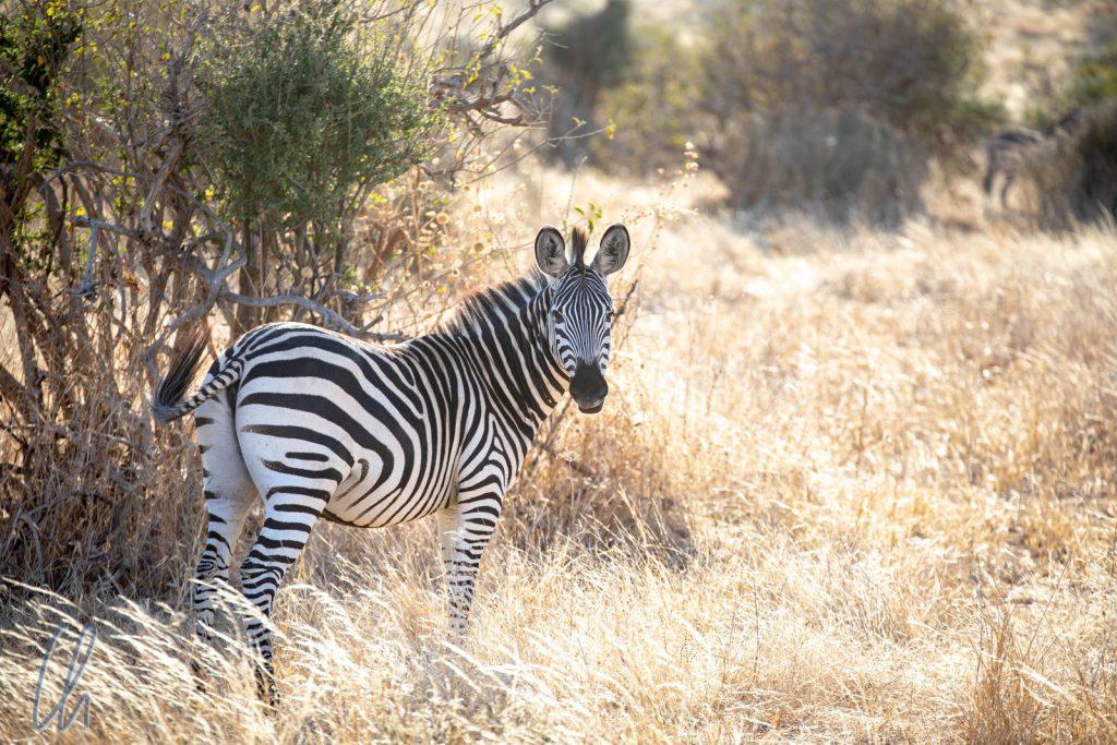 Unsere Safaris in Tansania waren spektakulär, aber das Land hat deutlich mehr zu bieten als nur afrikanische Fauna.