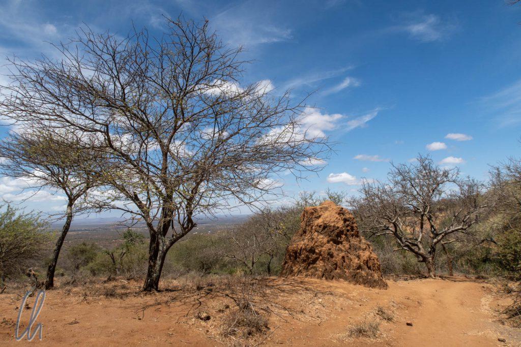 Im Norden von Tansania, nahe der Grenze zu Kenia, ist das Land trocken und nur ein bisschen grün.