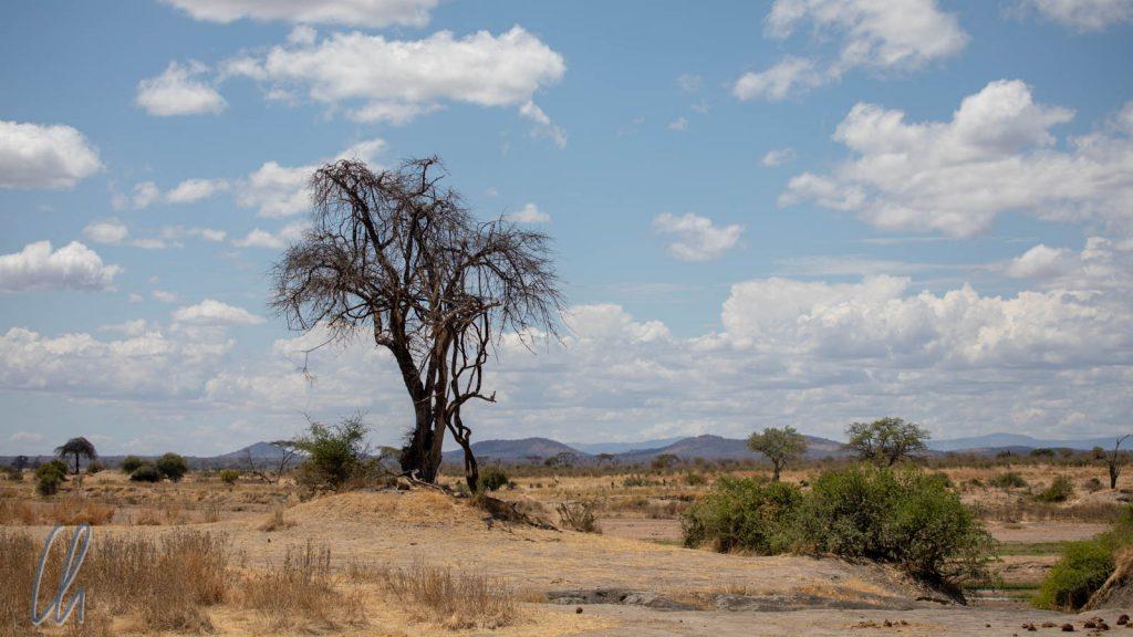 In der Nähe des Great Ruaha River im Ruaha Nationalpark…
