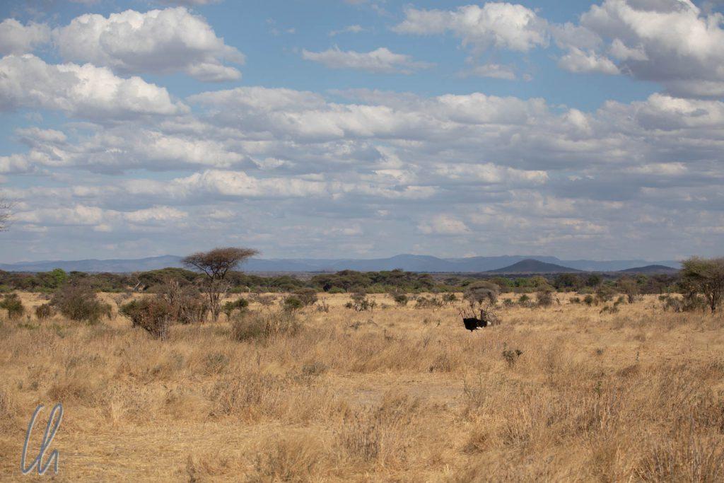 Ein weiter Blick über die Savanne im Ruaha Nationalpark
