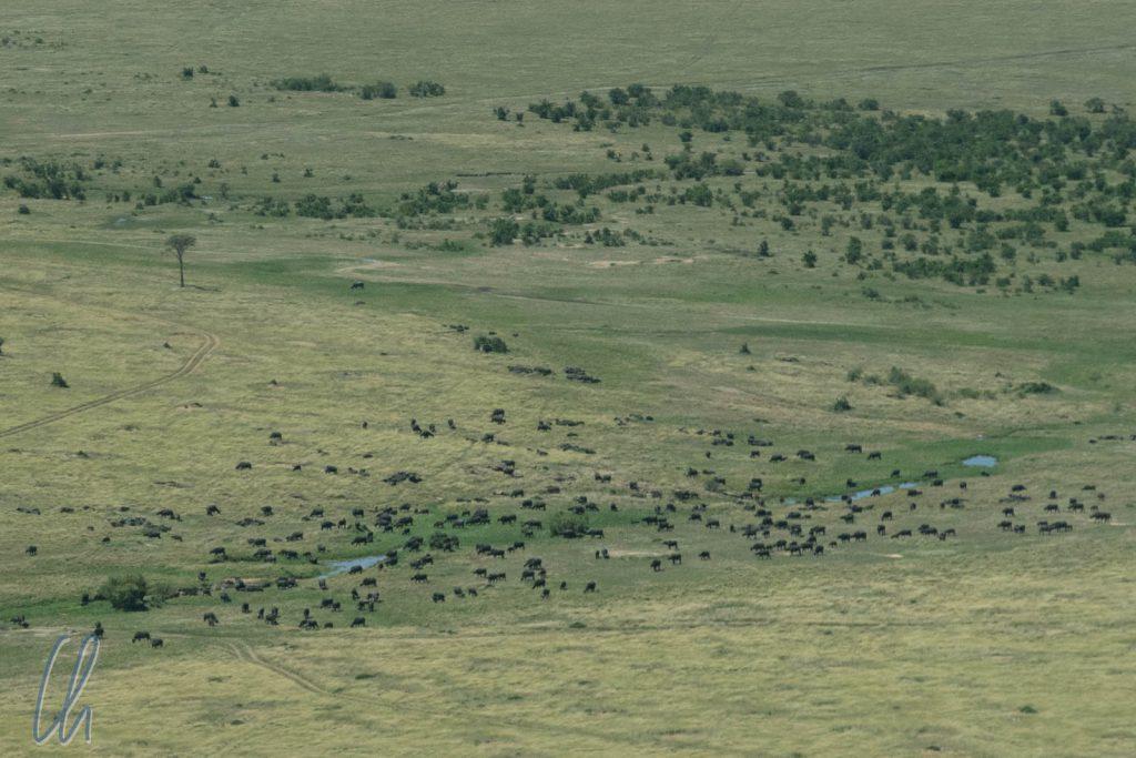 Vom Flugzeug aus konnten wir schon die ersten afrikanischen Tiere sehen.