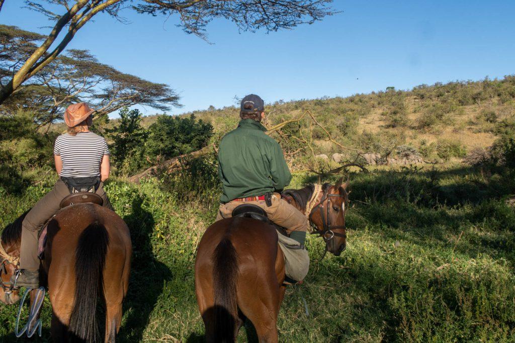 Eine Elefantenherde im Gebüsch (hinten rechts im Bild)