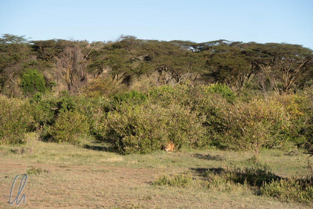 Erstaunlich viel Grün für die Masai Mara