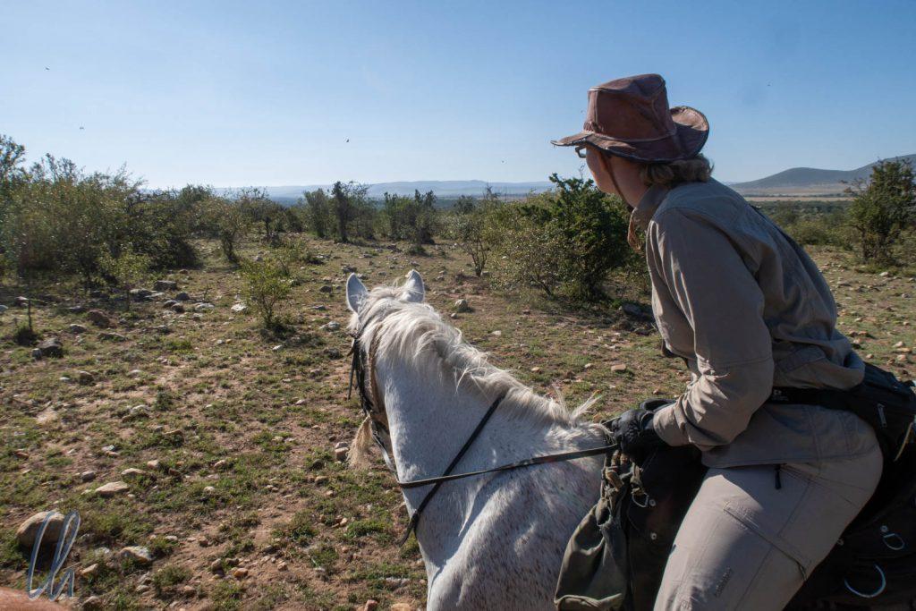 Der Pferdeblick weist den Weg.