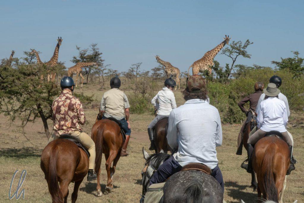 Giraffenherde voraus