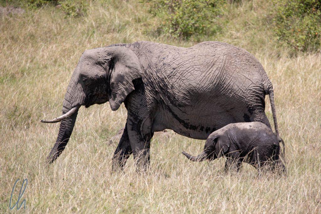 Mamafant and Babyfant